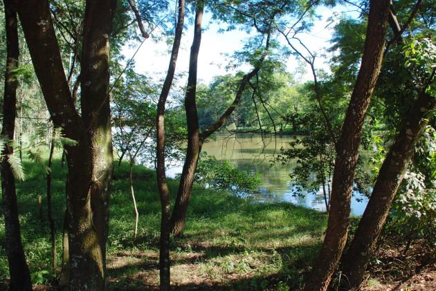 2010-04-21 Area de Preservacao Rios Arvores Ceu Azul Mata Usina Ferrari
