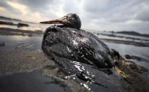 British Petroleum massive 2010 oil spill