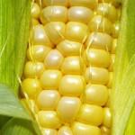 Grupo avalia custos de equipamentos para montar usina de milho