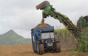 047 Sugar cane harvester edited (Small)