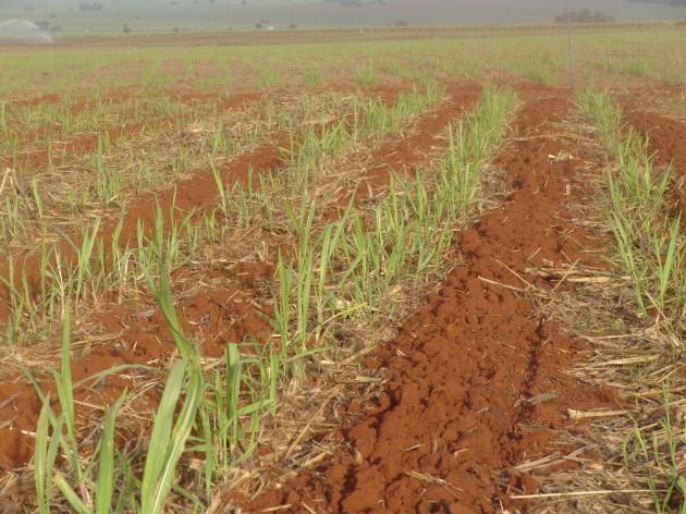 2004-06-24 Soqueira (2)