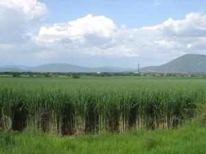 2005-07-31 Cana Mexico BioSugar (2)