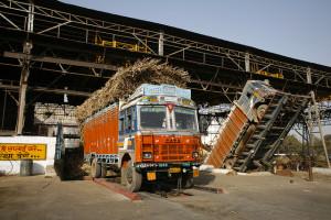 Trucks unload sugarcane at the sugar unit of Triveni industries.