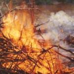 Canavial em chamas: incêndio criminoso?