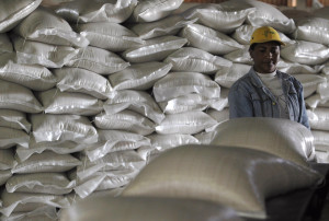 A sugar worker examines sacks of sugar at a Cuban sugar factory in Calimete