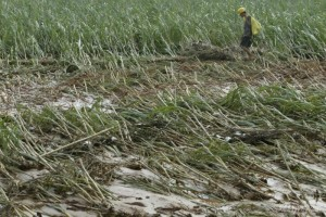 food-impacts-flooded-field