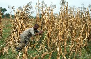 009-Kenya-Agriculture-2004-Ruef