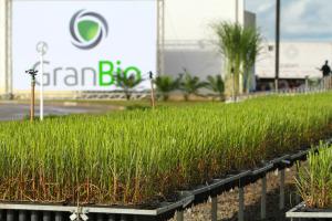 2013-11-06 Estação Experimental da GranBio Biovertis Credito Michel Rios  (3)