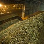 Tombamento da cana na usina e inicio da moagem (2)