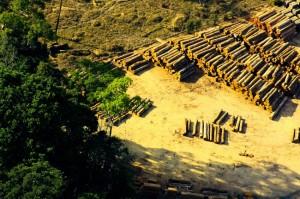 2014-10-31 Desmatamento Amazonia Meio Ambiente Floresta Arvore