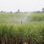 O uso da irrigação ganha novas regras na África do Sul
