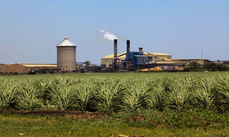 MDG : Swaziland : Sugar cane and sugar mill