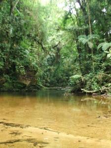 2004-01-04 Mata Ciliar