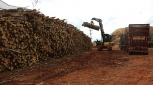 Cavaco de madeira na Usina Pitangueiras