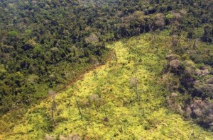 area degradada amazonia