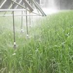 Irrigação 2