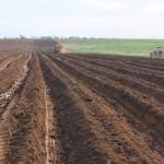 Preparo de terra canavieira em Itapemirim: aproveitamento das chuvas