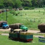 cane-trucks-at-labasa-mill
