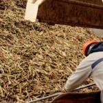 Operário da San Buenaventura: destilaria nova às vésperas de ser inaugurada