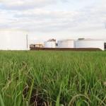 Preço elevado do etanol deve incrementar a receita das usinas este ano (Foto: Ernesto de Souza/Ed. Globo)