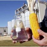 A produção de etanol a partir do milho é esperada para dezembro próximo