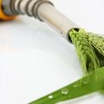 algae_biofuel