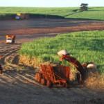 Colheita no Espírito Santo em 2015: seca prejudicou a safra
