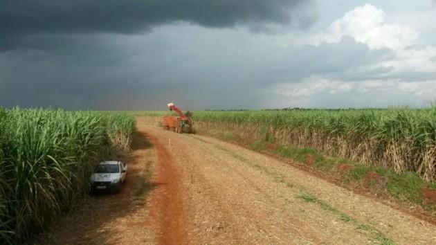 Colheita no interior paulista: penalizada pelas chuvas