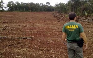 Foto: Ibama/Divulgação